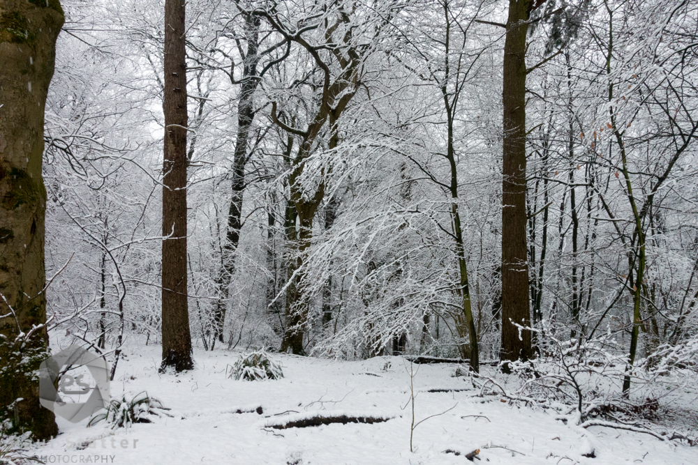 Collecting Snowy Backgrounds